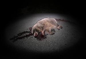 Twenty-Six Roadkills artists' book no.10 Daniel D. Teoli Jr.