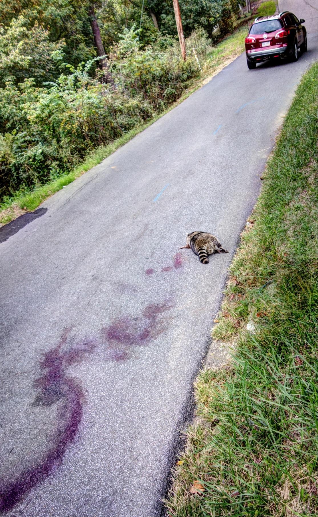 Twenty-Six Roadkills artists' book no.18 Daniel D. Teoli Jr.