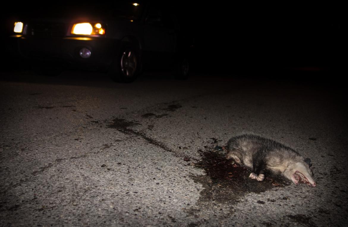 Twenty-Six Roadkills artists' book no.5 Daniel D. Teoli Jr.
