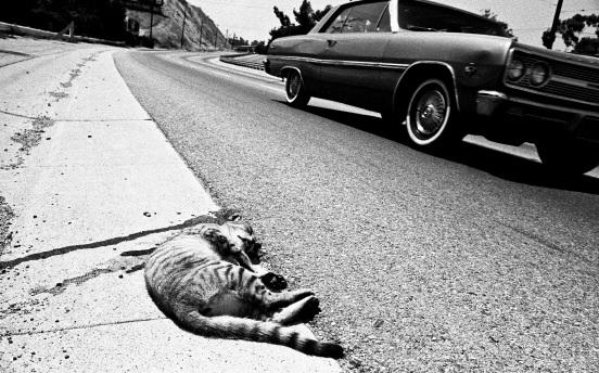 Twenty-Six Roadkills artists' book no.8 Daniel D. Teoli Jr.