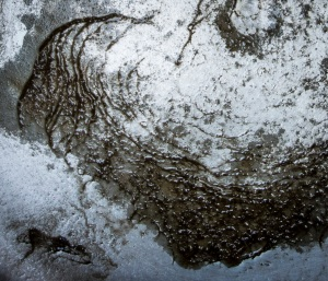 Distillation residue from 1 gallon of unfiltered Ohio River water closeup