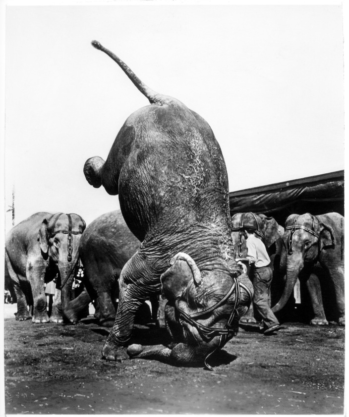 1951 - Selection from The End of an Era - Daniel D. Teoli Jr. Archival Collection (1) mr