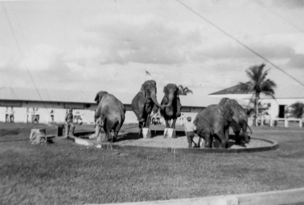 1951 - Selection from The End of an Era - Daniel D. Teoli Jr. Archival Collection (2) mr