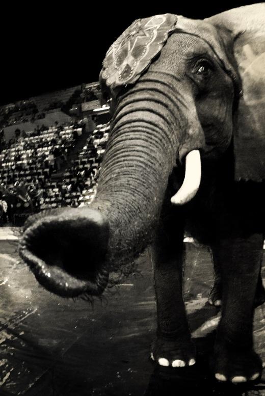 Circus Elephant 2013 Daniel D. Teoli Jr V23