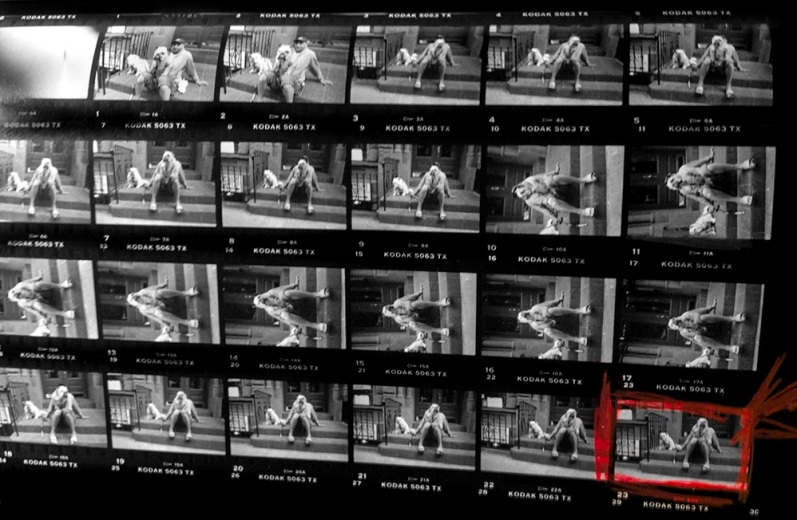 elliot-erwitt-bulldog-contact-sheet